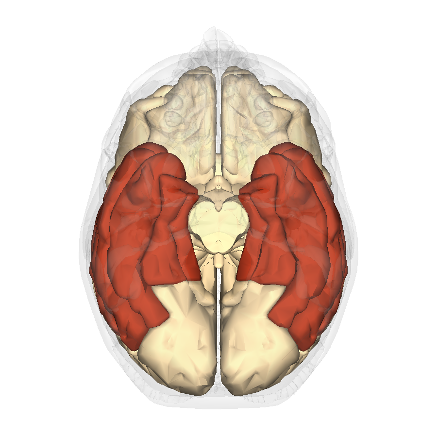 Does music training change the brain? - Music Psychology